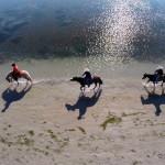 Horse Riding in Grado